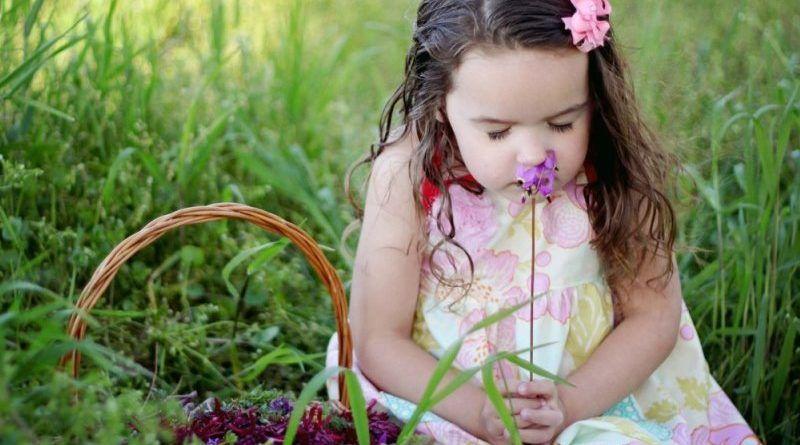 Загадки про растения: цветы, травы, лекарственные и комнатные