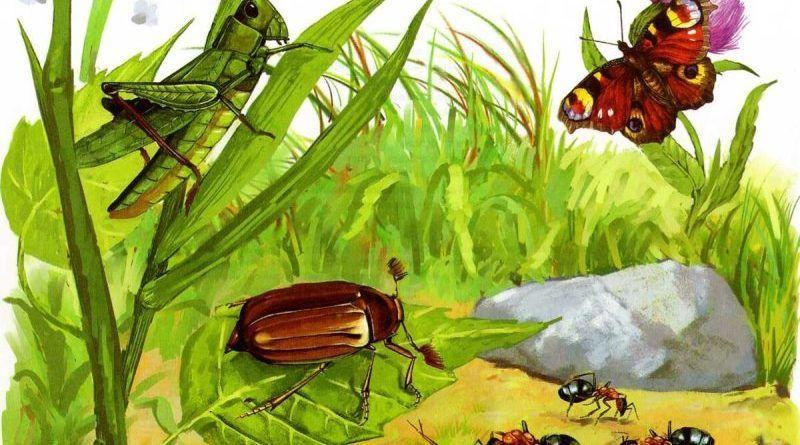 Загадки про насекомых: букашек, пауков, жуков, ос, червячков и мошек