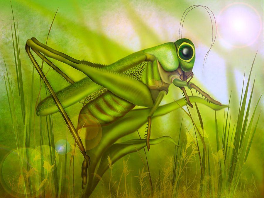 Детские загадки про кузнечика: зеленого, прыгучего насекомого