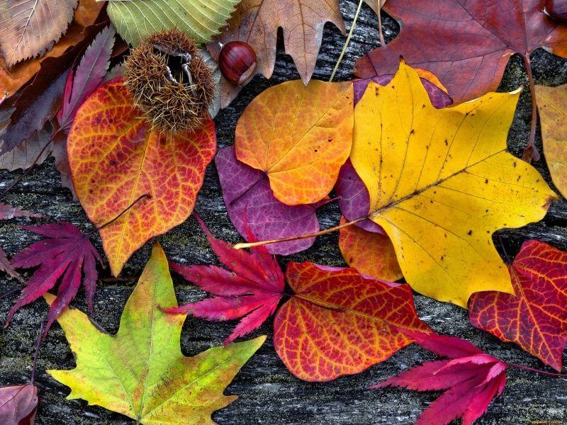Аппликации из осенних листьев: лучшие идеи для детей