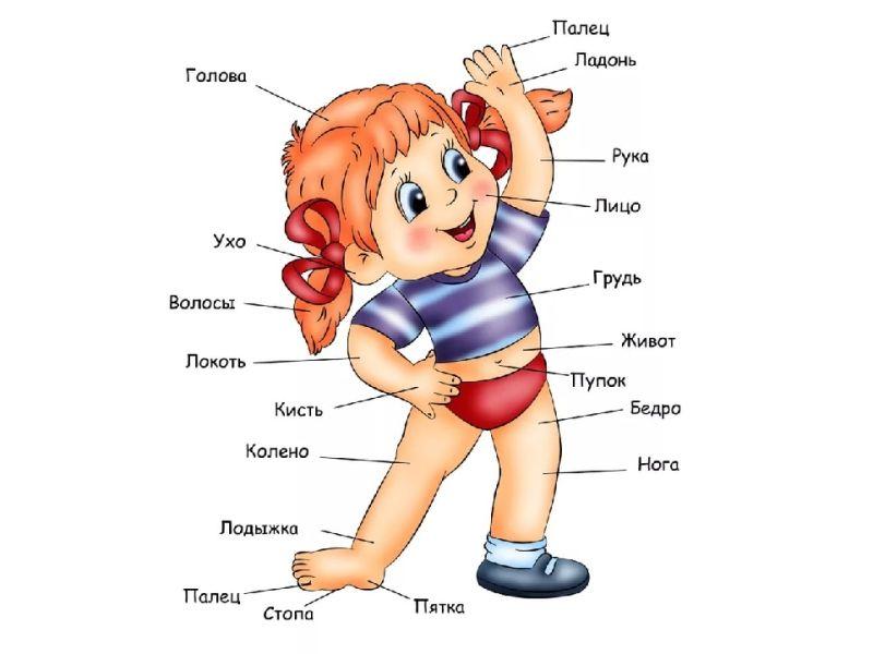 Загадки про части тела для детей: ручки, ножки, глазки, ушки
