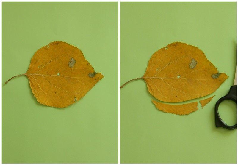 """Аппликация из осенних листьев """"Ежик в лесу"""" 3"""