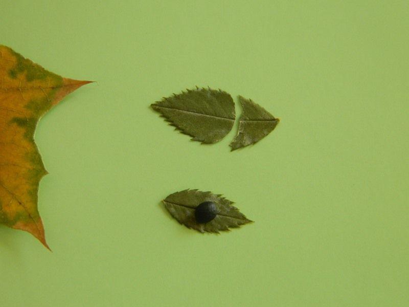 """Аппликация из осенних листьев """"Ежик в лесу"""" 5"""