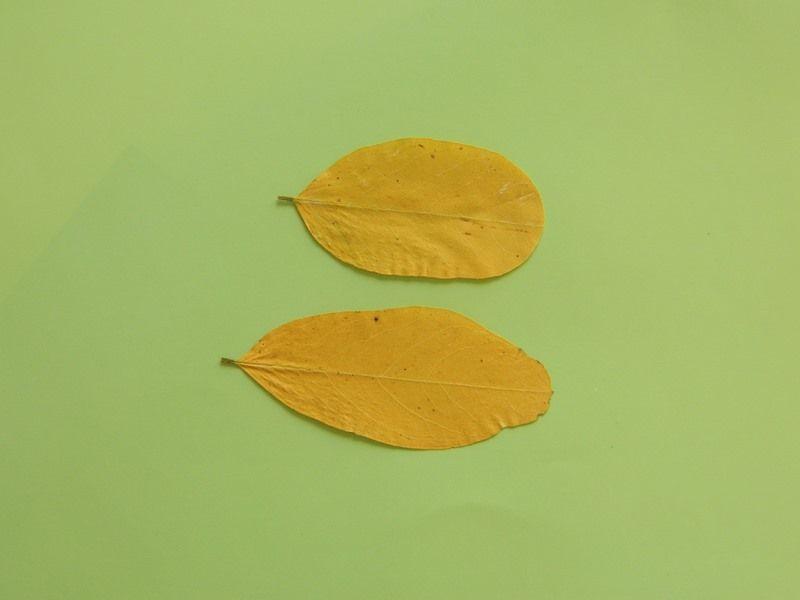 """Аппликация из осенних листьев """"Ежик в лесу"""" 7"""