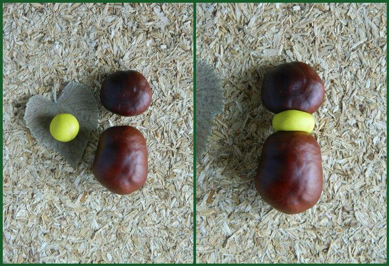 Поделка из каштанов и пластилина: жук
