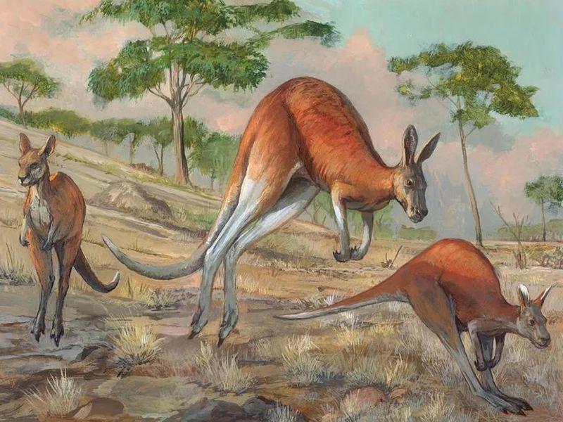 Откуда у кенгуру сумка Австралийская народная сказка
