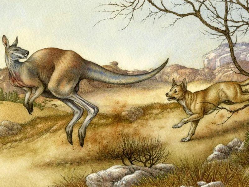 Кенгуру и собака Динго / Австралийская народная сказка