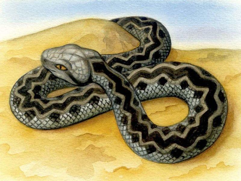 Как змея стала ядовитой / Австралийская народная сказка