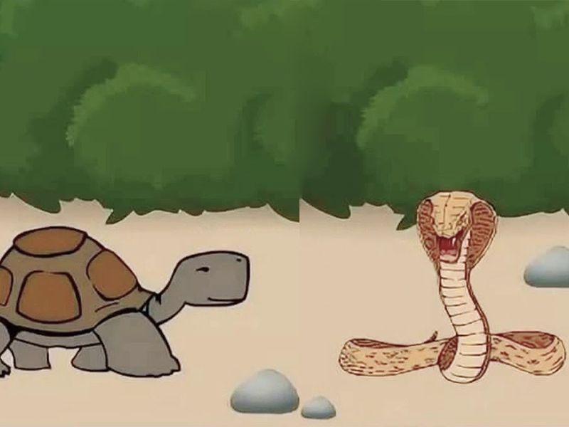Как змеи и черепахи обменялись головами Сказки Австралии и Океании