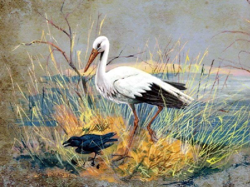 Ворон и аист: австралийская народная сказка