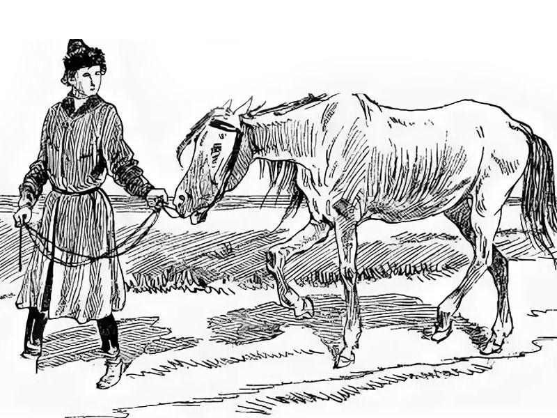 Волшебный конь, русская народная сказка