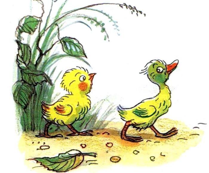 Цыпленок и утенок: Сказка