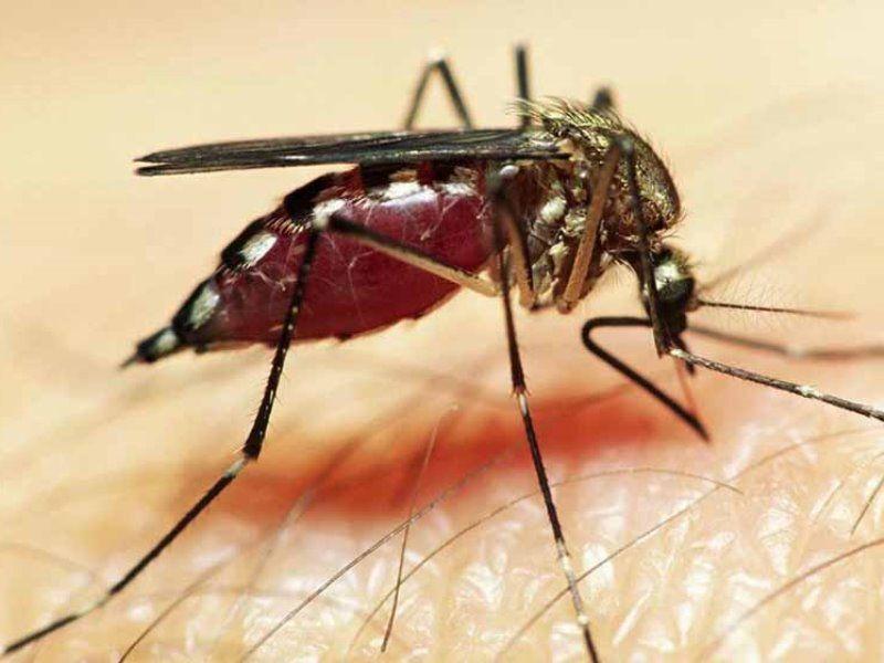Как выбрать репеллент для защиты от укусов насекомых
