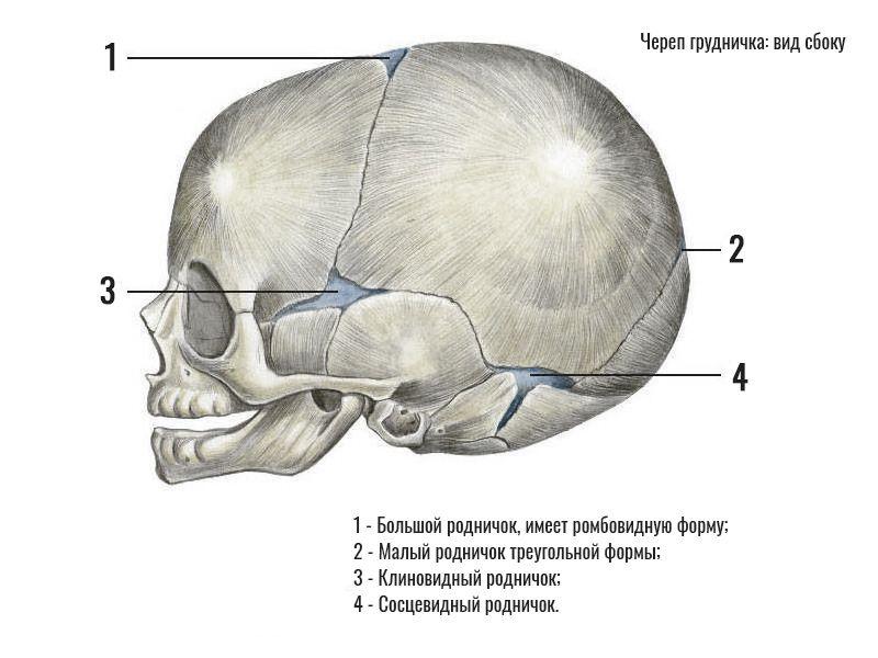 Родничок у грудничка