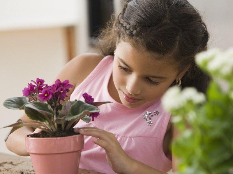 Комнатные растения, которые очищают воздух и разрешенные в детской